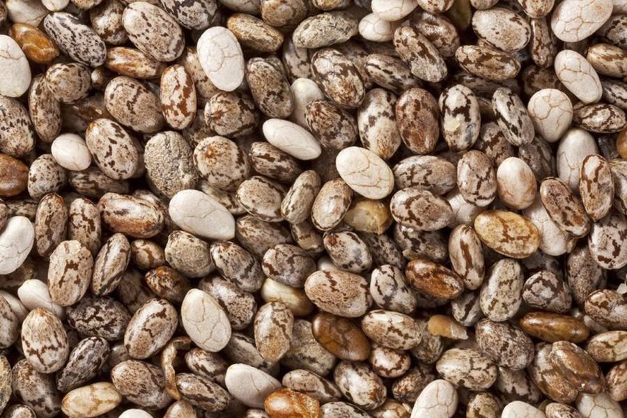 chia zaden uitvergroot