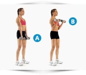 biceps curl oefening